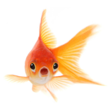 Human attention span is shorter than a goldfish