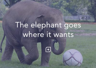 The elephant goes where it wants to go.